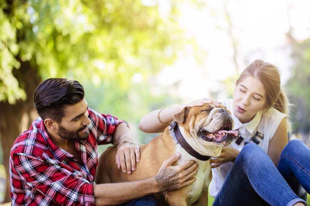 couple playing with dog in the park