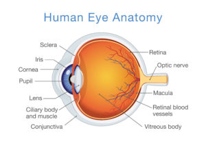 Guide To Macular Pucker What Is It Is Surgery Always Needed Nvision Eye Centers